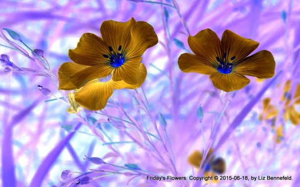 wild flax flowers, color inverted