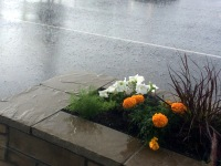 Rain coming down in a parking lot, stone flower planter