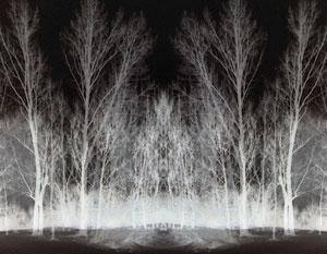 mist arising in a dark forest