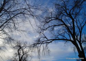 silhouettes of tree branches against a blue and clouded sky