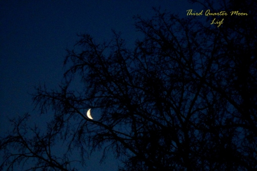 the waning crescent moon seemingly tangled in tree branches