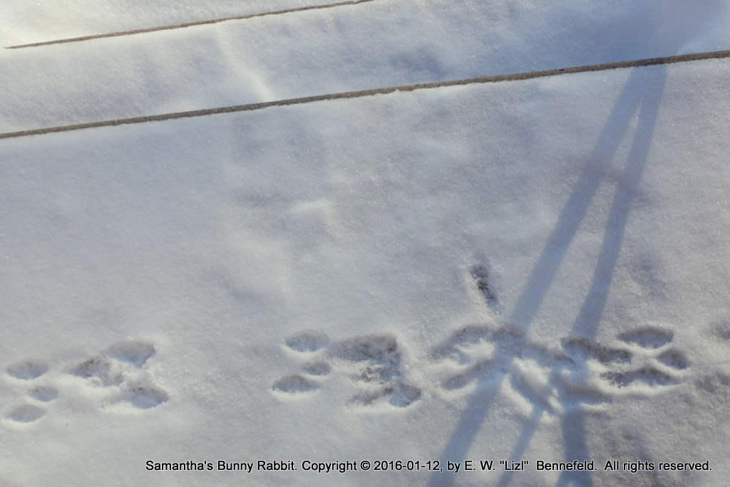Rabbit tracks over the front steps