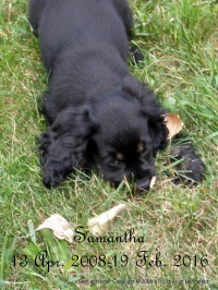 Samantha, puppy picture