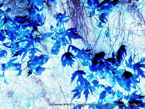 fallen leaves, inverted color