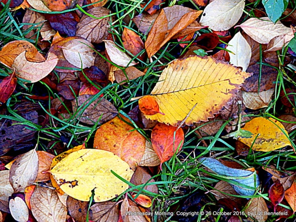 fallen leaves, multicolored, on green grass at the end of october