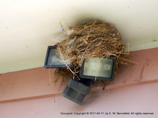 a birds' nest on an old set of lights