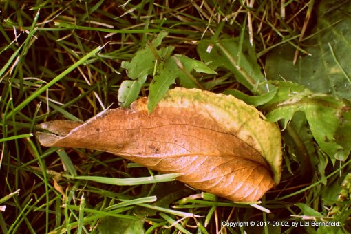 a leaf, fallen too soon from its branch