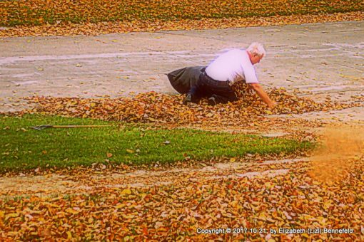 raking leaves from the front yard on a windy day