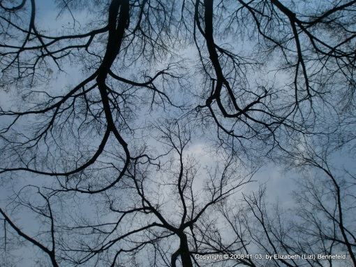 bare tree branches, multiple trees