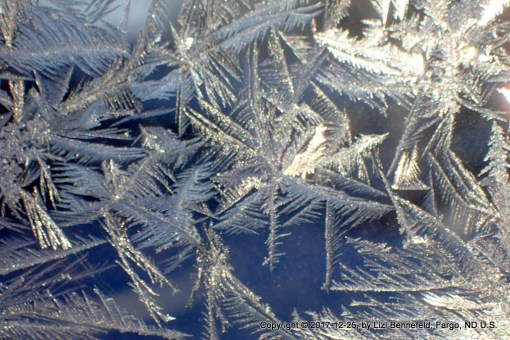 frost ferns on the window pane