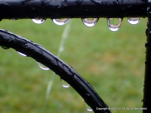 raindrops hanging from the metal garden fence
