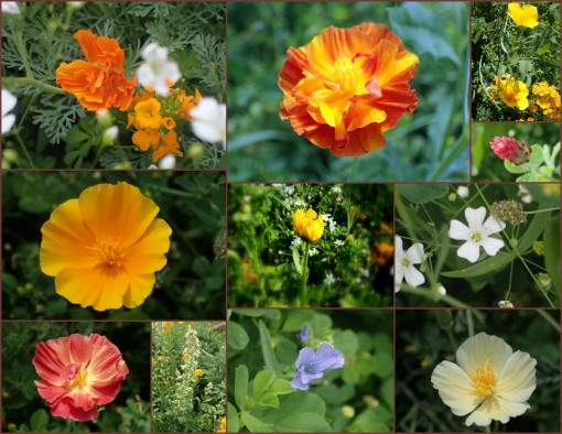 collage of our flower gardens
