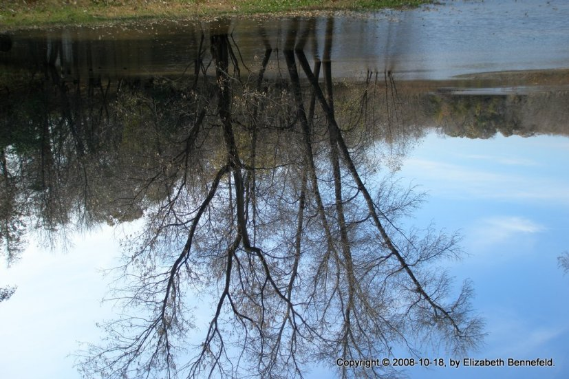 Reflection in Flood Waters