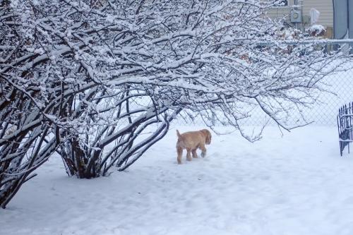 Thadd, wandering the back yard