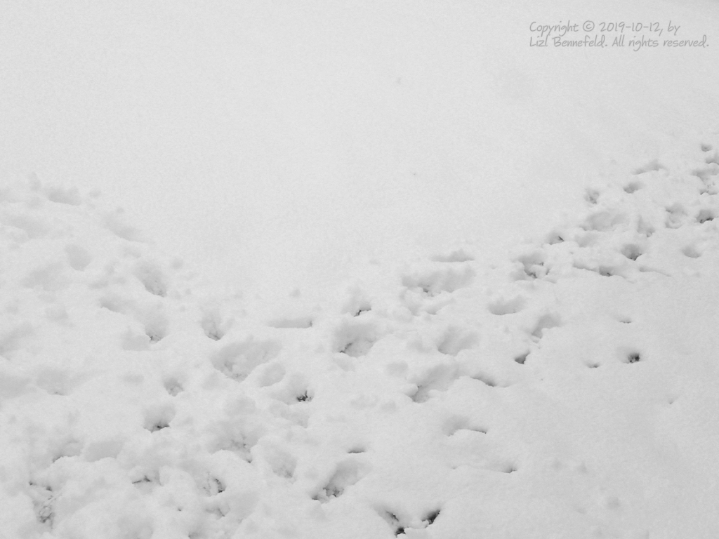 Rabbit paths in the snow
