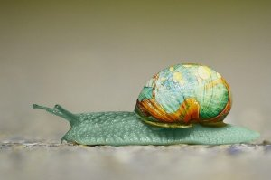 snail, painted iridescent shell