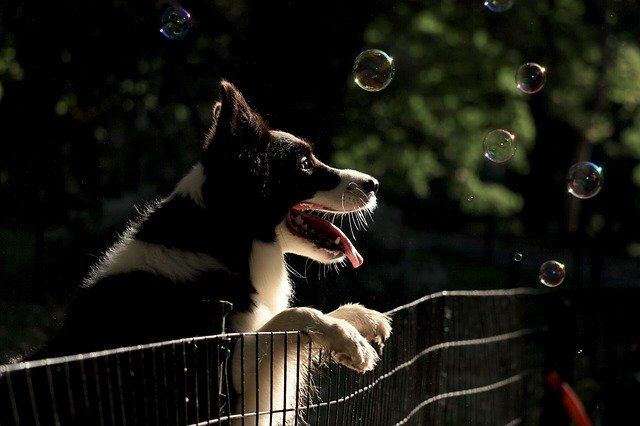 dog and bubbles photo by Ali Vidler