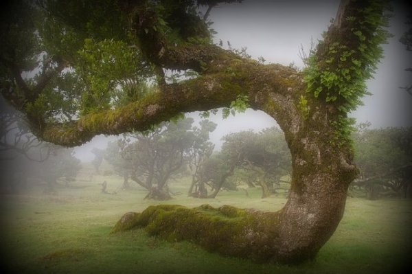 laurel forest altered from original