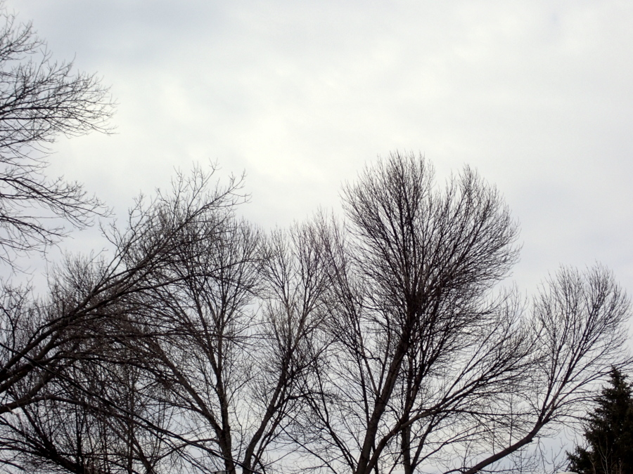 bare branches backed by clouds