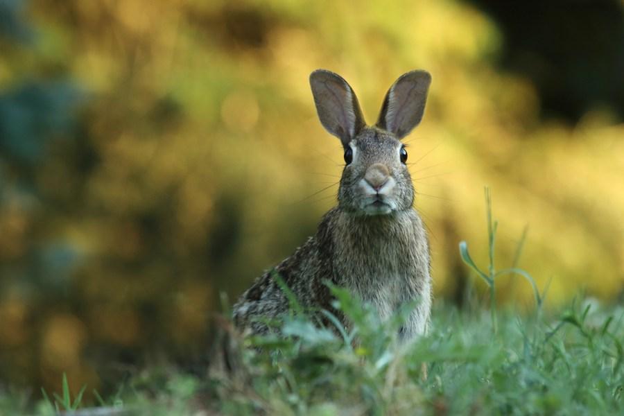 rabbit in grass, unsplash
