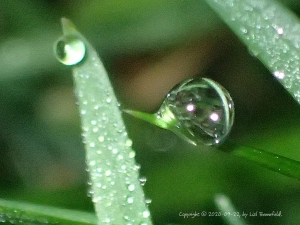 dewdrops on the grass, close-up
