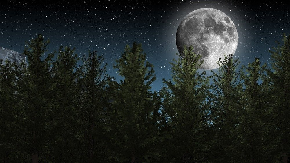 forest, night sky, large moon