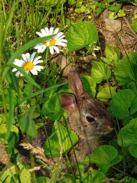 rabbit under flowers
