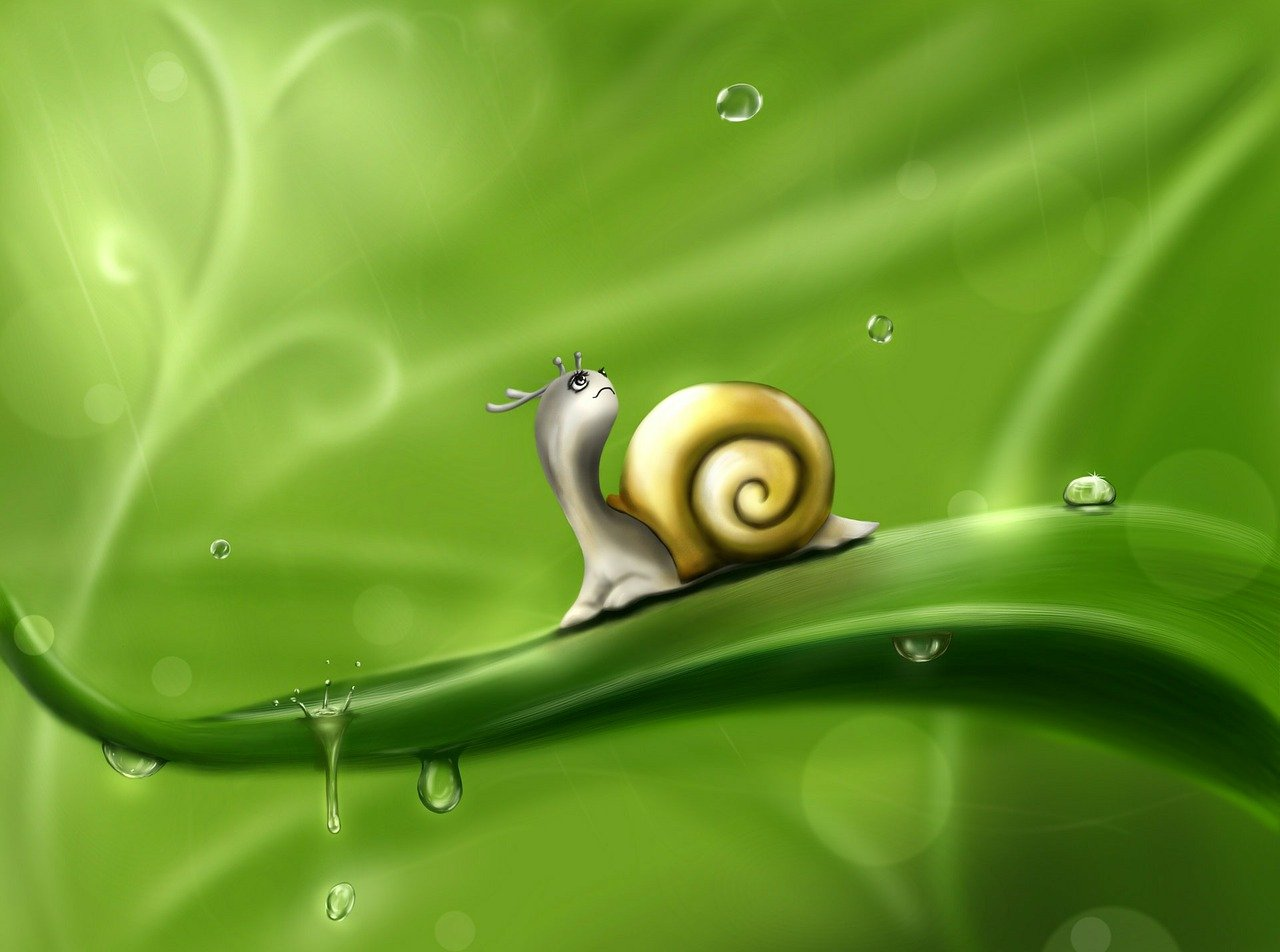 image snail in rain