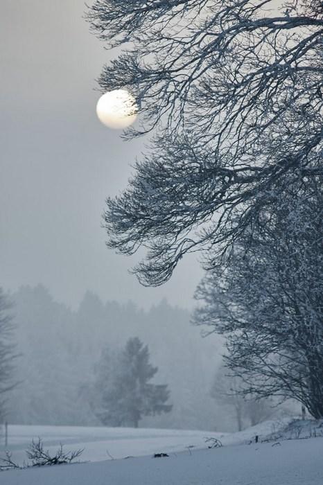 winter scene, snow, moon